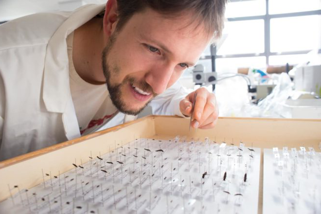 A student works in the Latrielle Invertebrate Ecology Laboratory, studying the beetle collection.